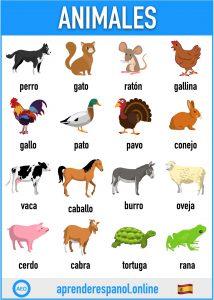 animales en español - aprender español online - vocabulario de los animales en español