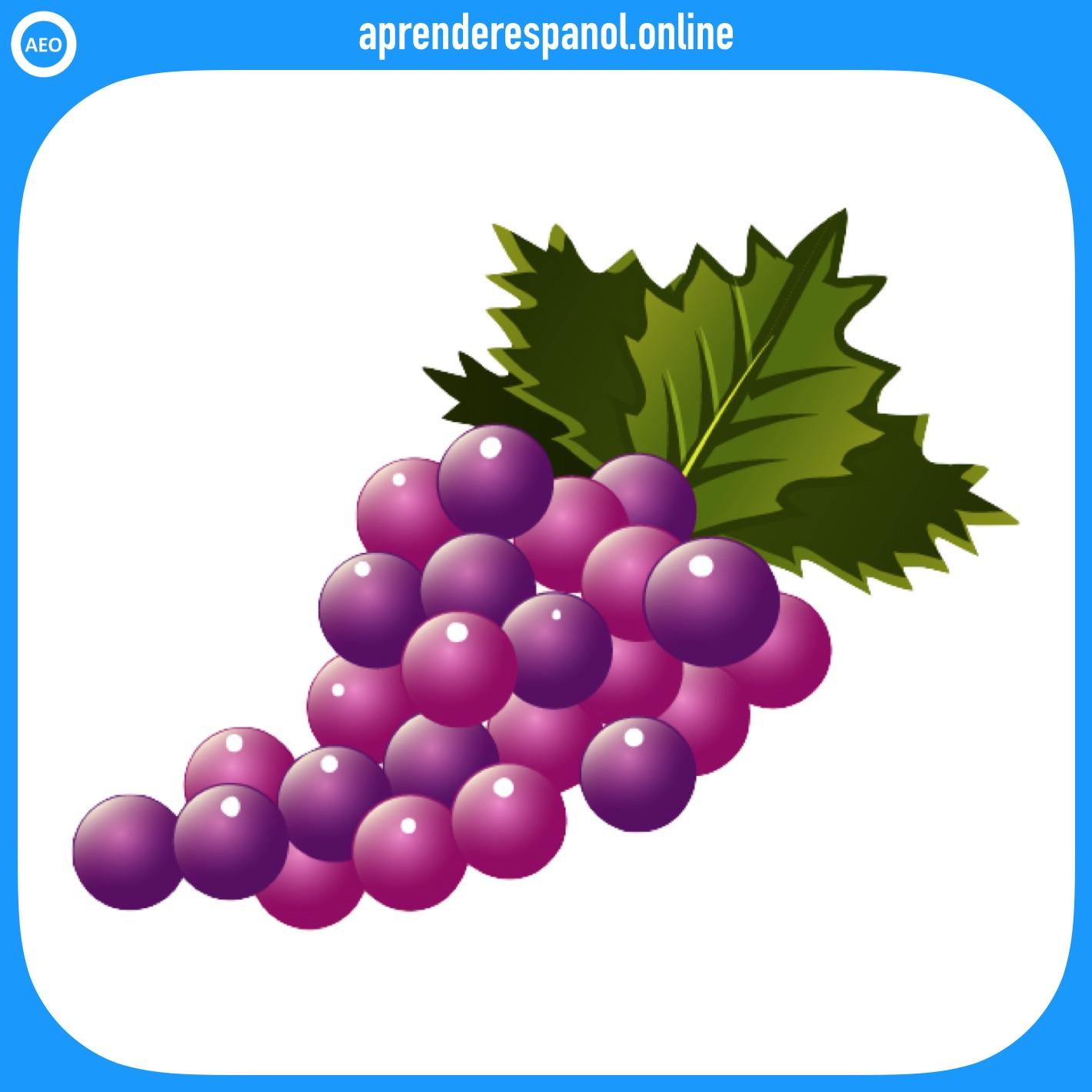 frutas: uva - frutas en español - vocabulario de las frutas en español