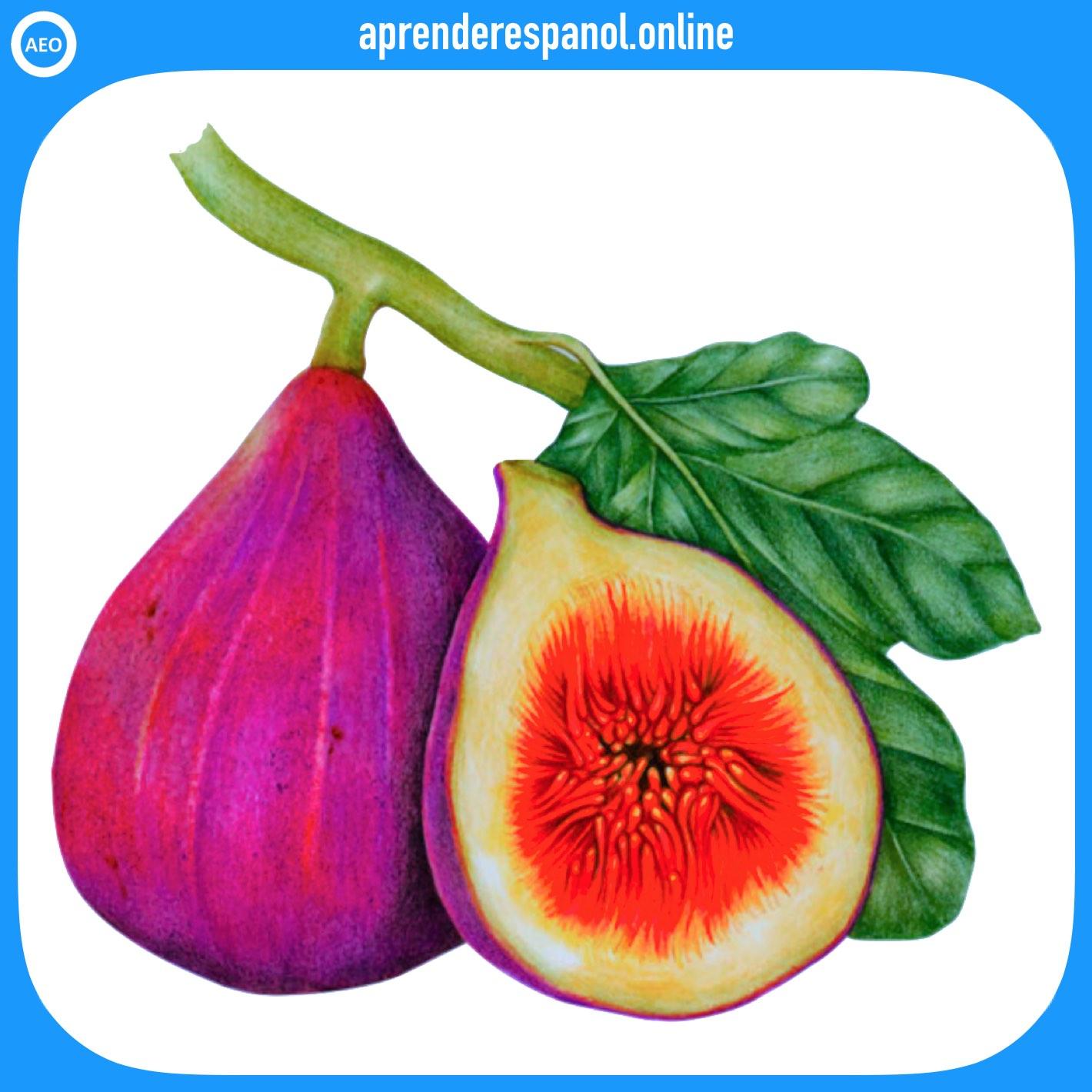 higo - frutas en español - vocabulario de las frutas en español