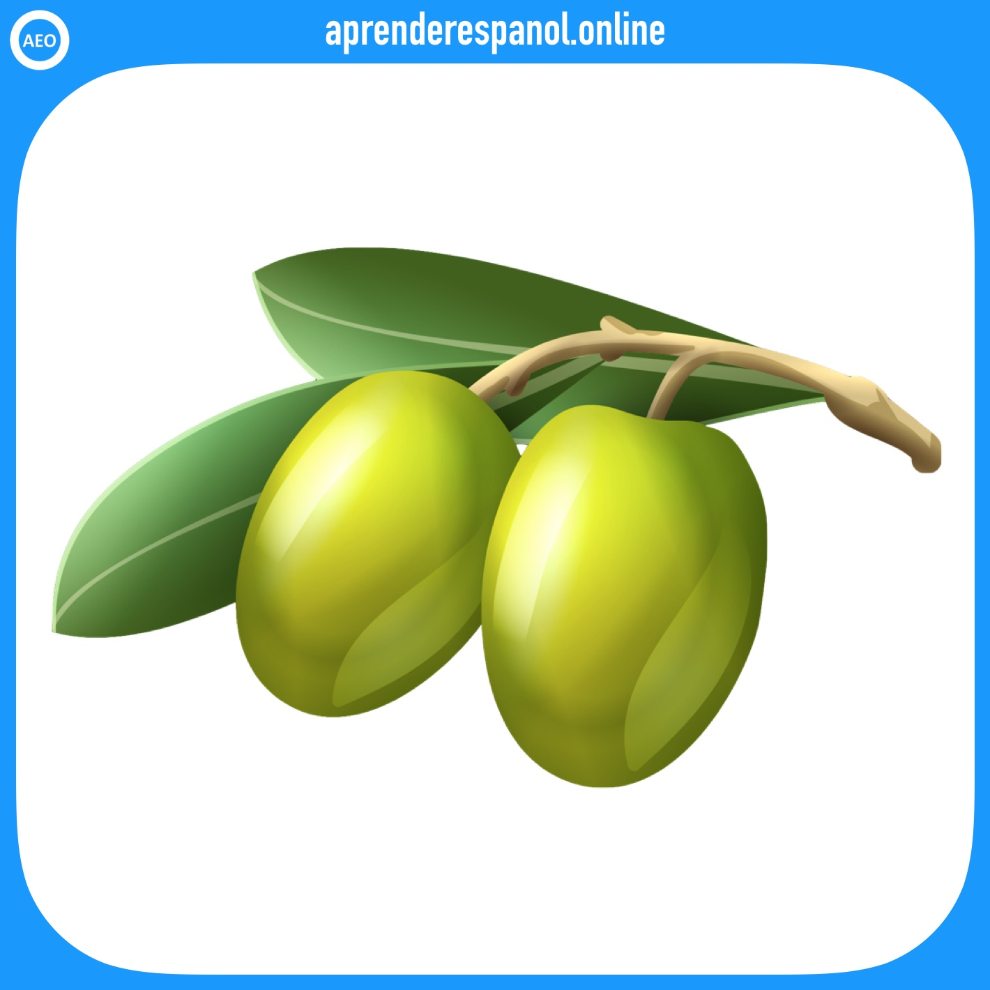aceituna | verduras en español | vocabulario de las verduras en español
