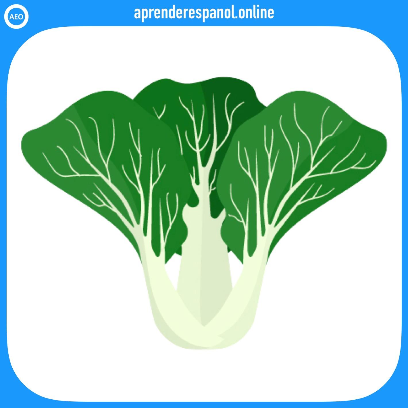 acelga | verduras en español | vocabulario de las verduras en español