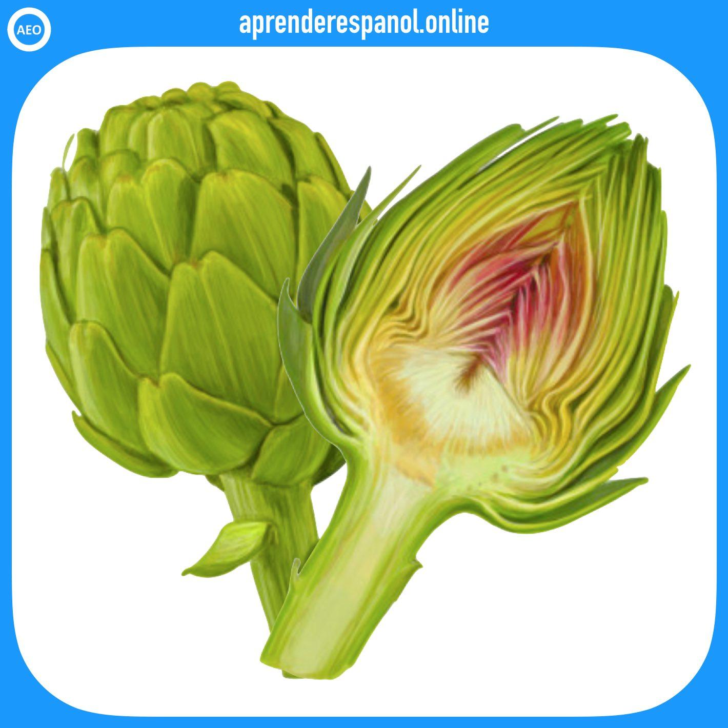 alcachofa | verduras en español | vocabulario de las verduras en español