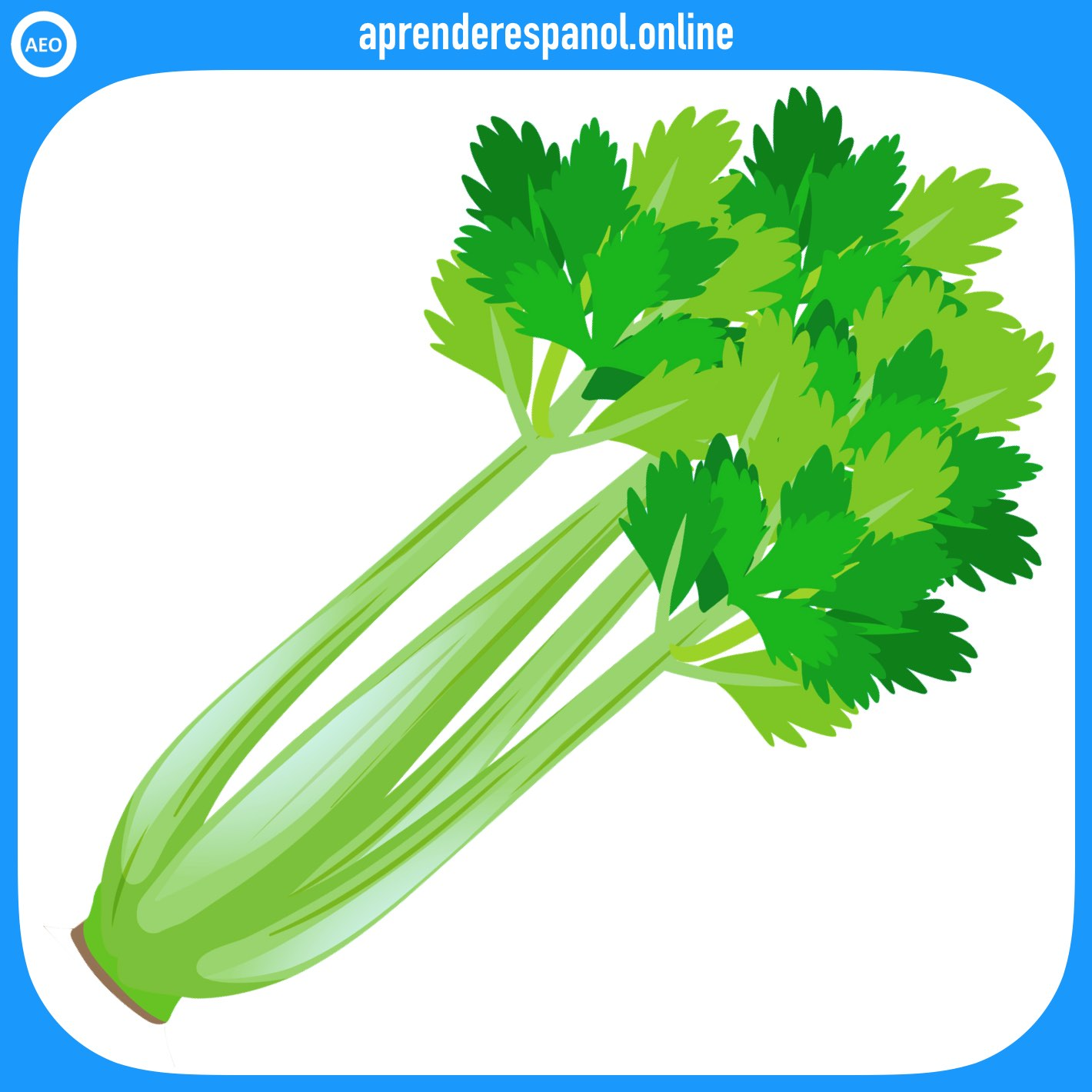 apio | verduras en español | vocabulario de las verduras en español