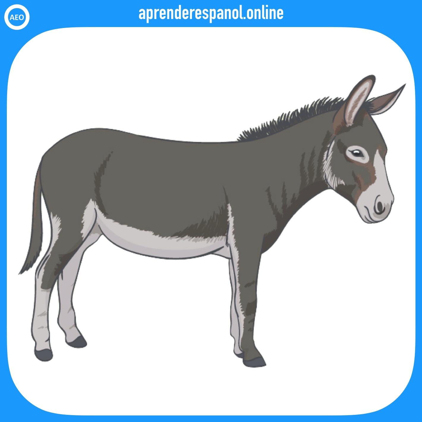 burro | animales en español | vocabulario de los animales en español