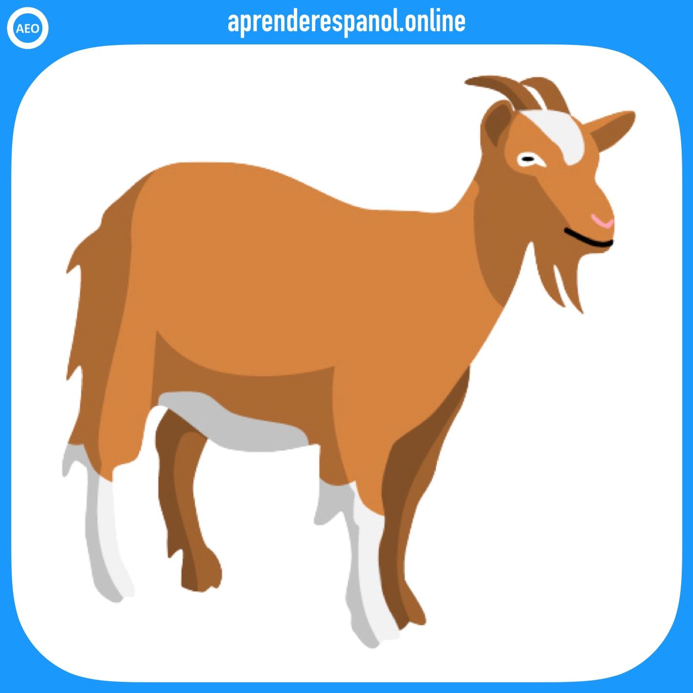 cabra | animales en español | vocabulario de los animales en español