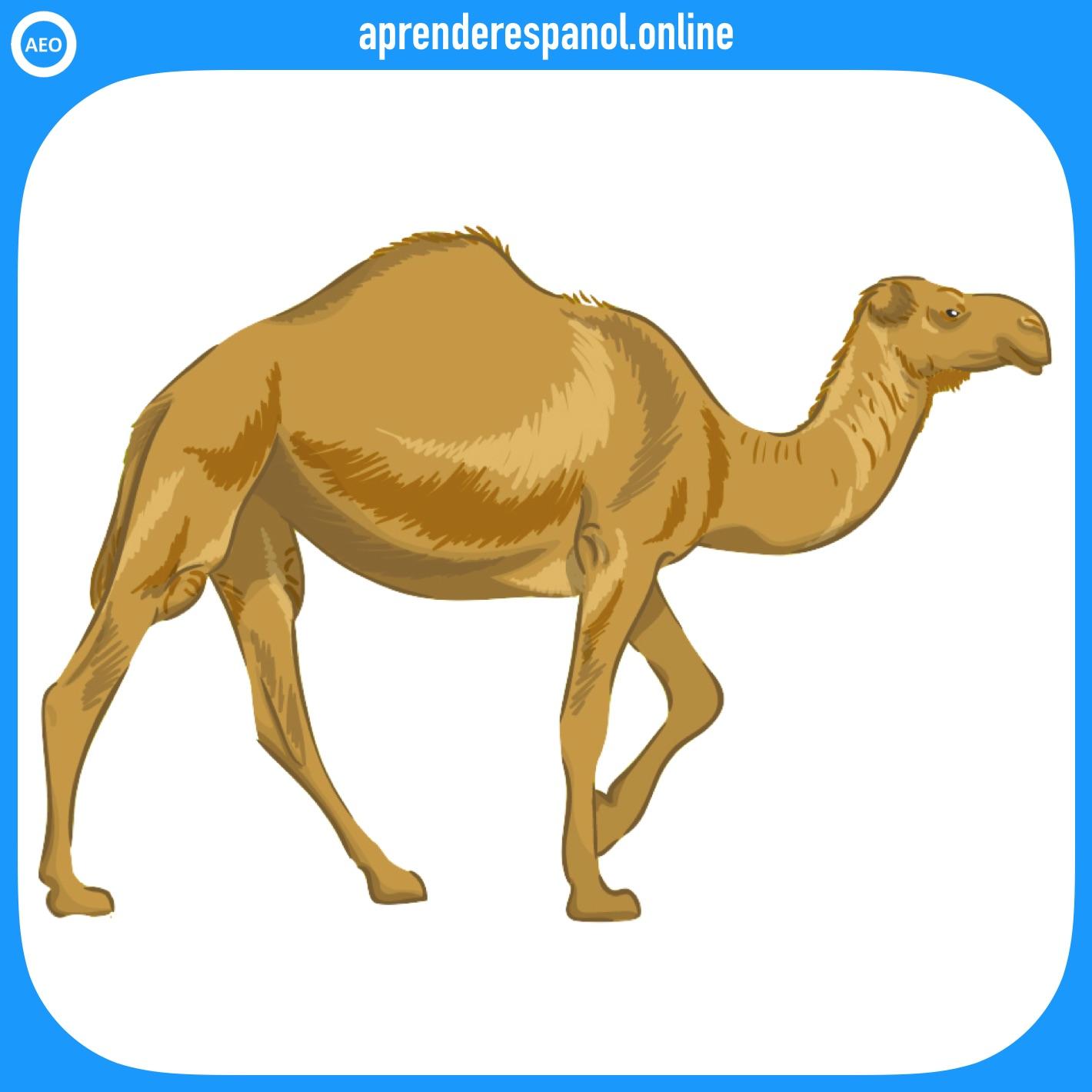 camello | animales en español | vocabulario de los animales en español