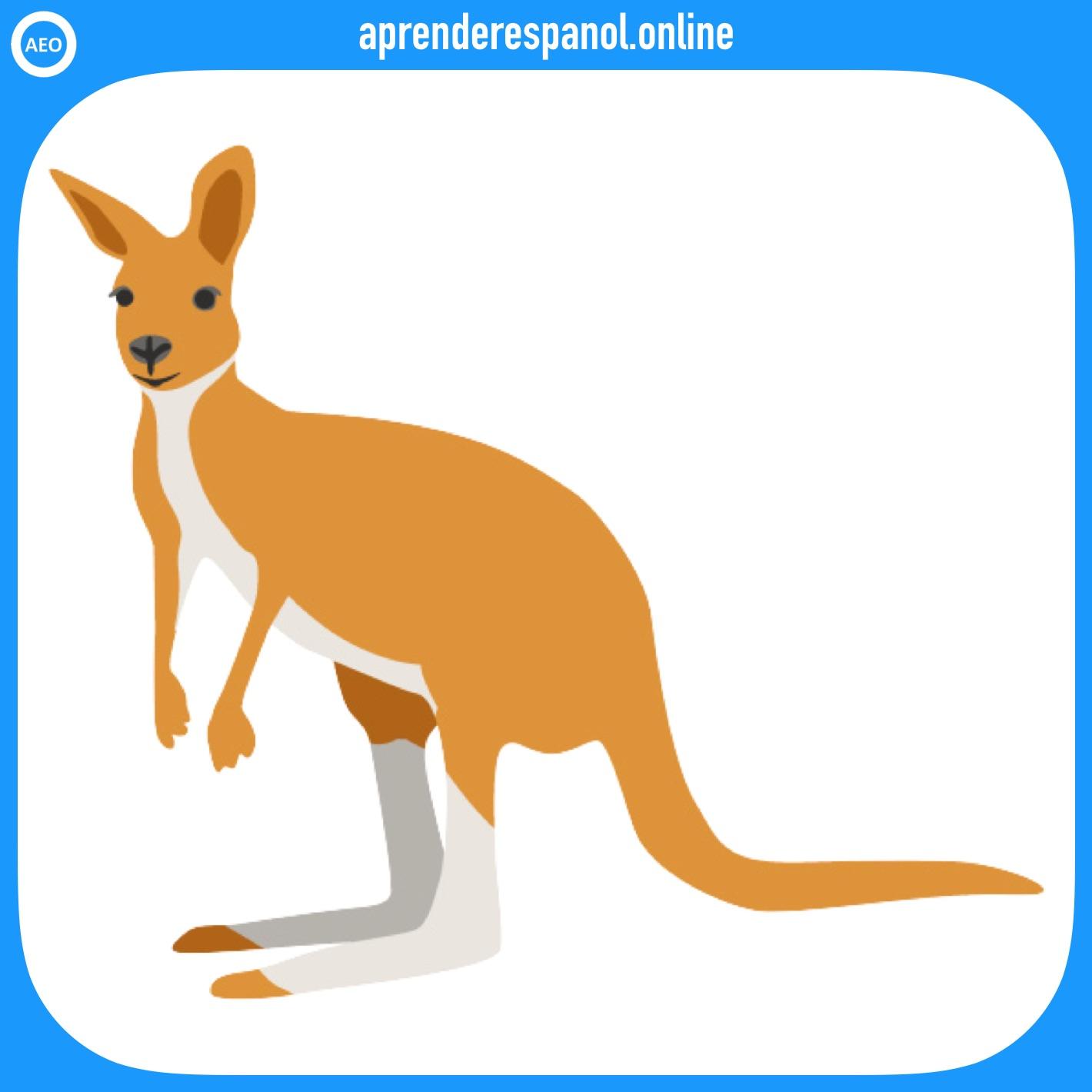 canguro | animales en español | vocabulario de los animales en español