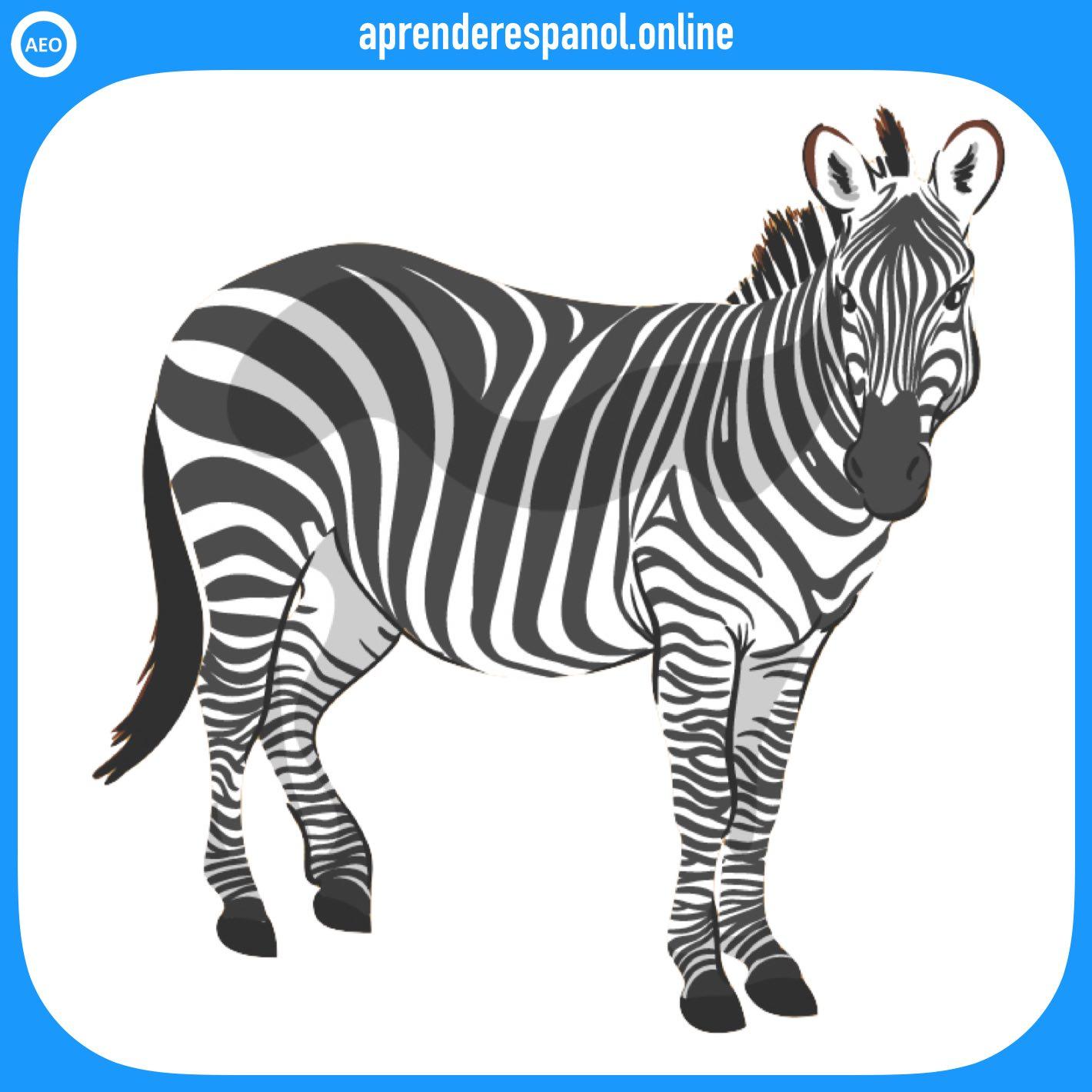 cebra | animales en español | vocabulario de los animales en español