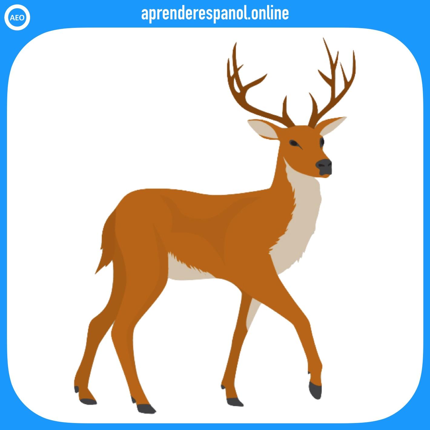 ciervo | animales en español | vocabulario de los animales en español