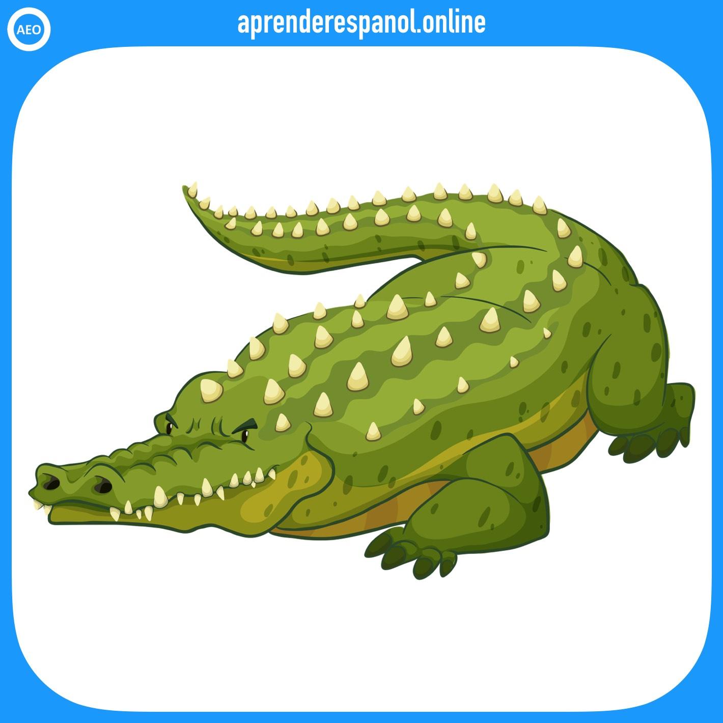 cocodrilo | animales en español | vocabulario de los animales en español