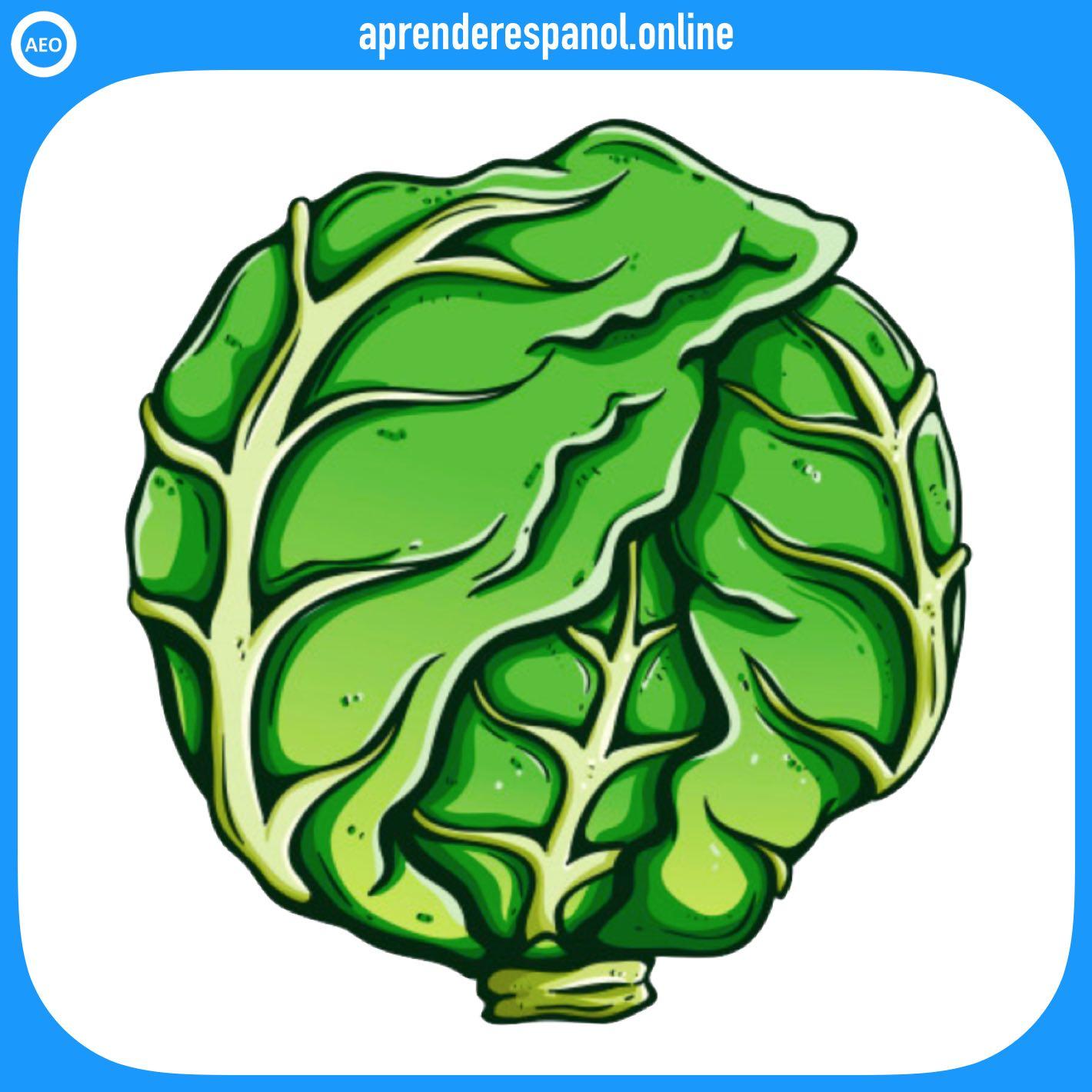 col | verduras en español | vocabulario de las verduras en español