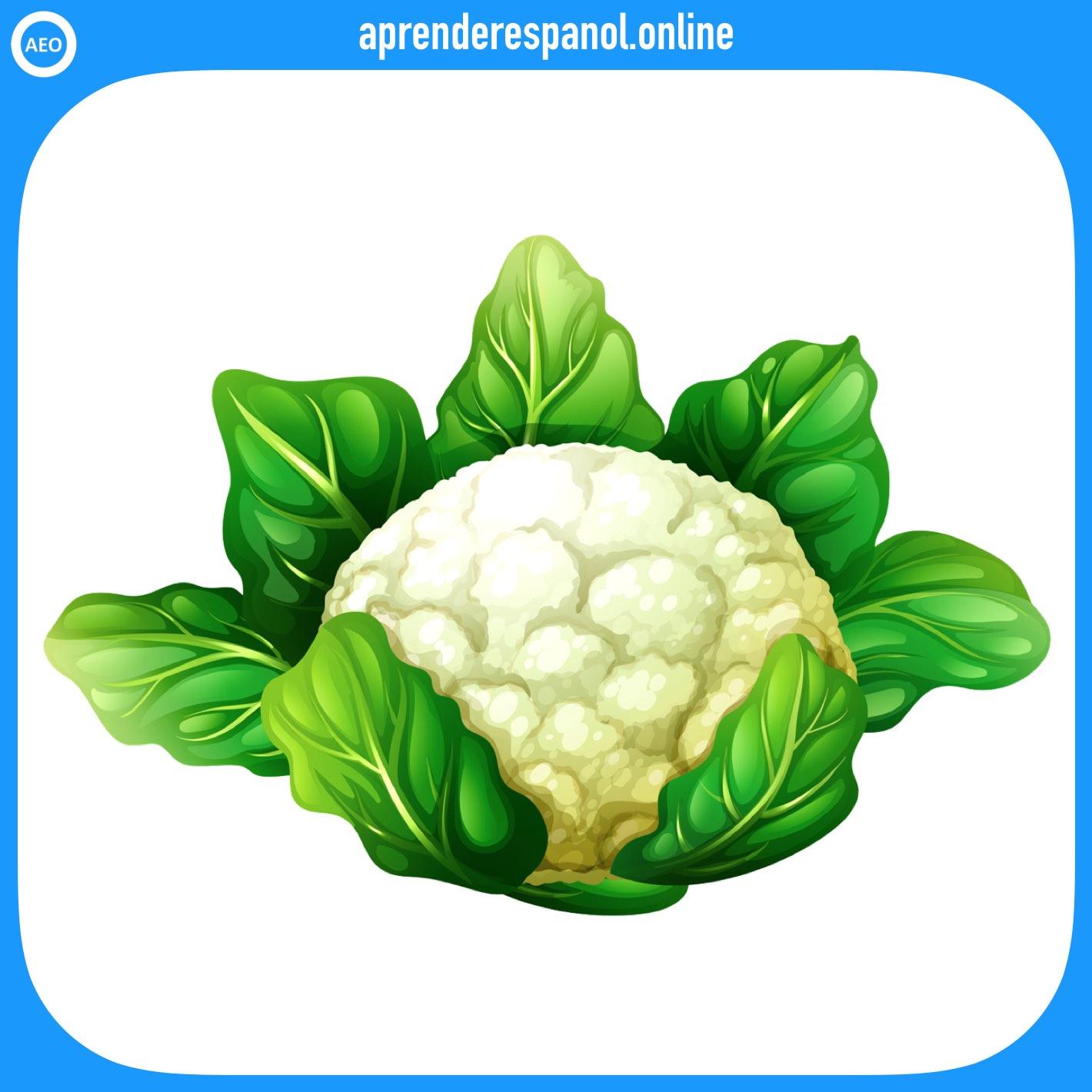coliflor | verduras en español | vocabulario de las verduras en español