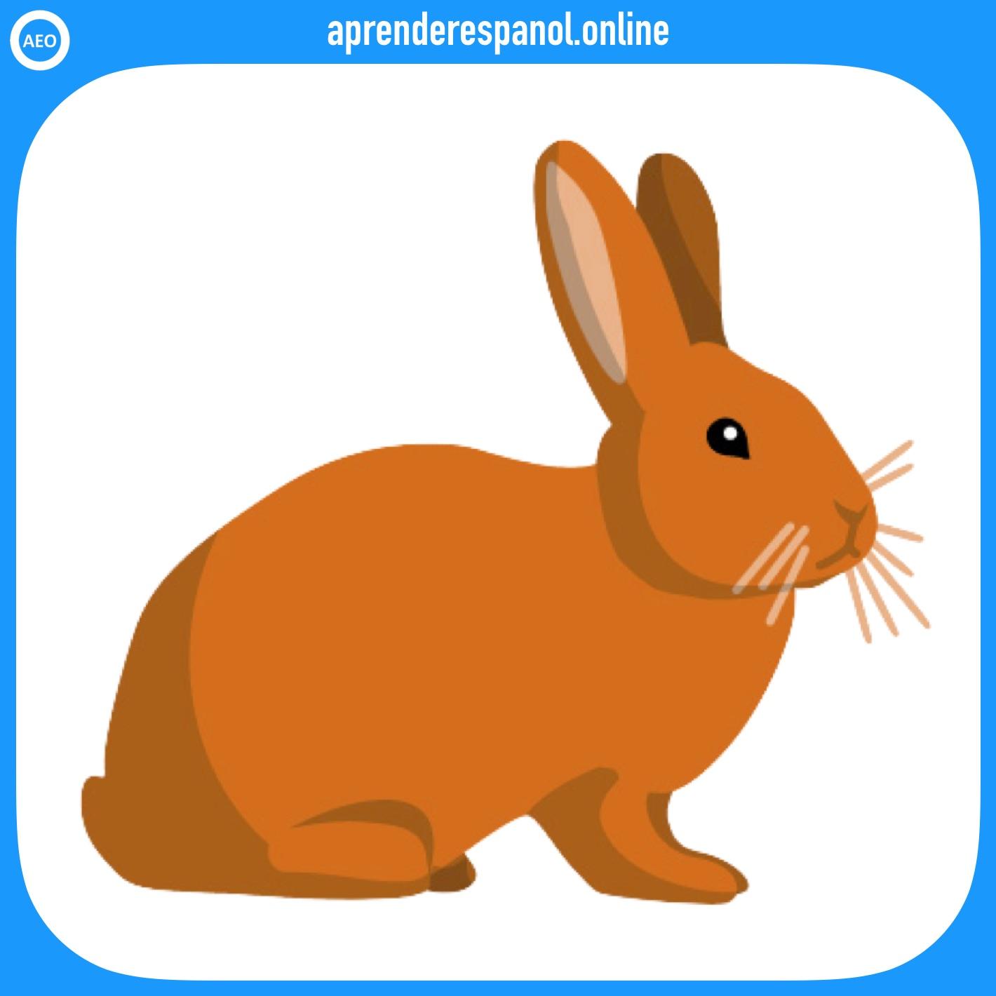 conejo | animales en español | vocabulario de los animales en español