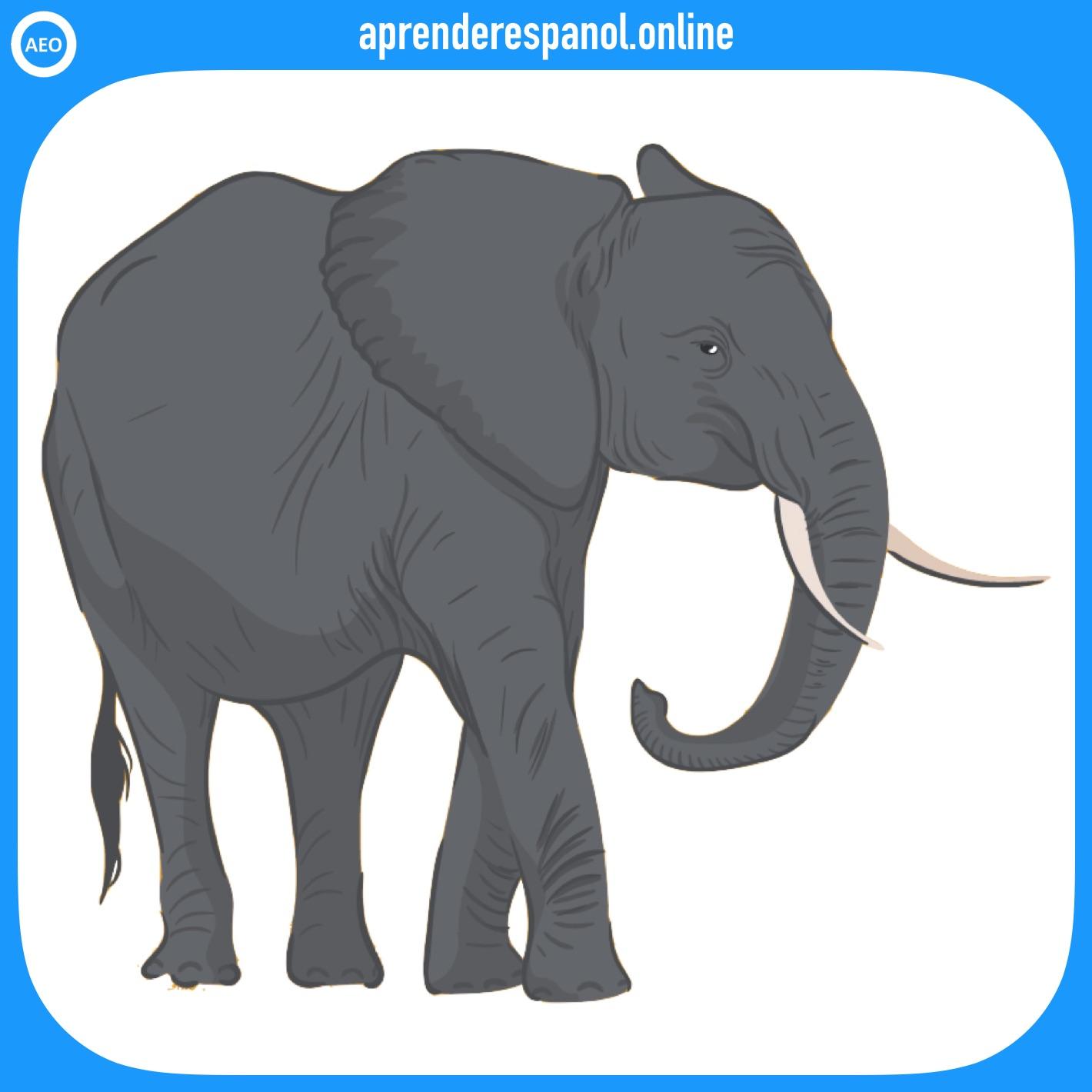 elefante | animales en español | vocabulario de los animales en español