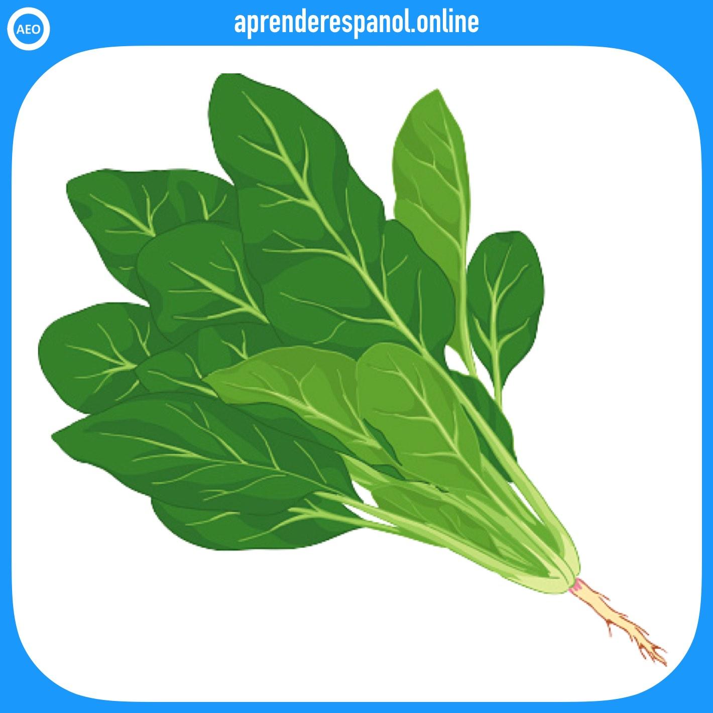 espinaca | verduras en español | vocabulario de las verduras en español