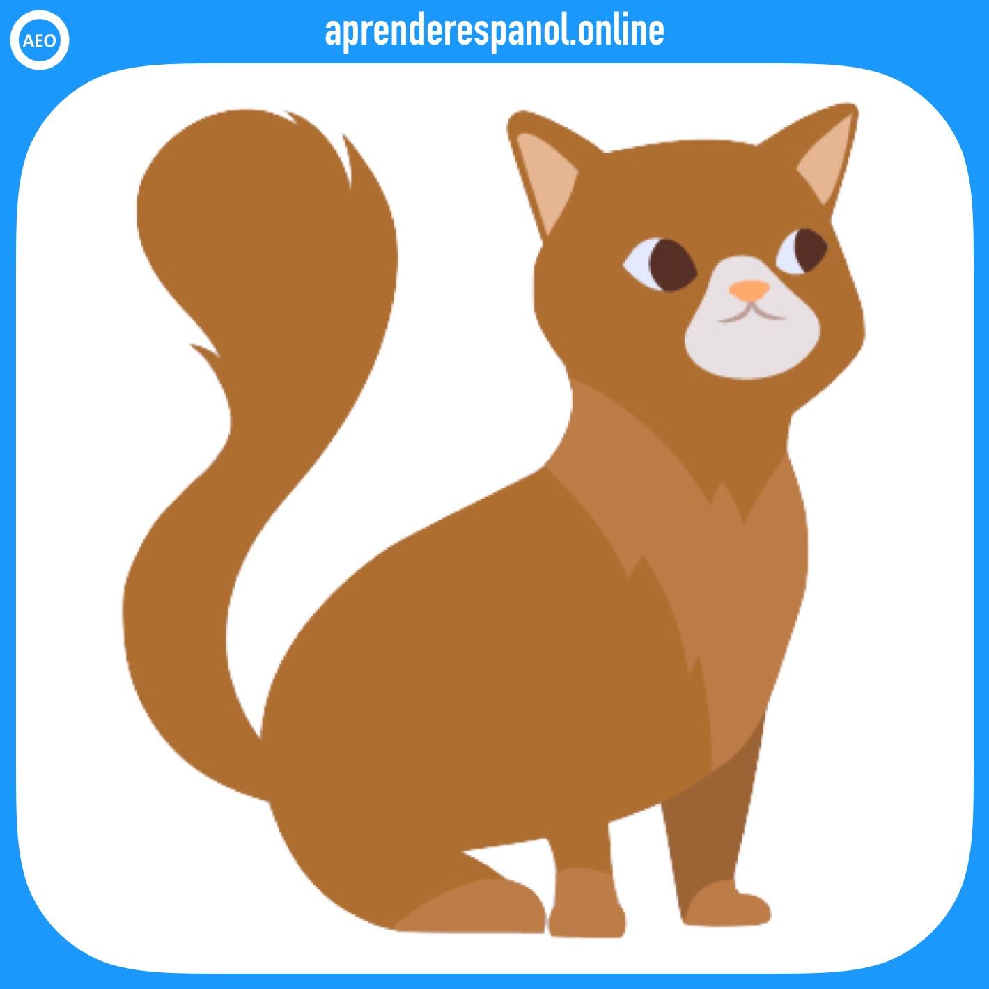 gato | animales en español | vocabulario de los animales en español