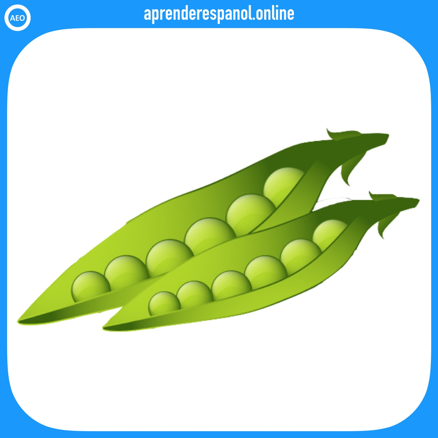 guisante | verduras en español | vocabulario de las verduras en español