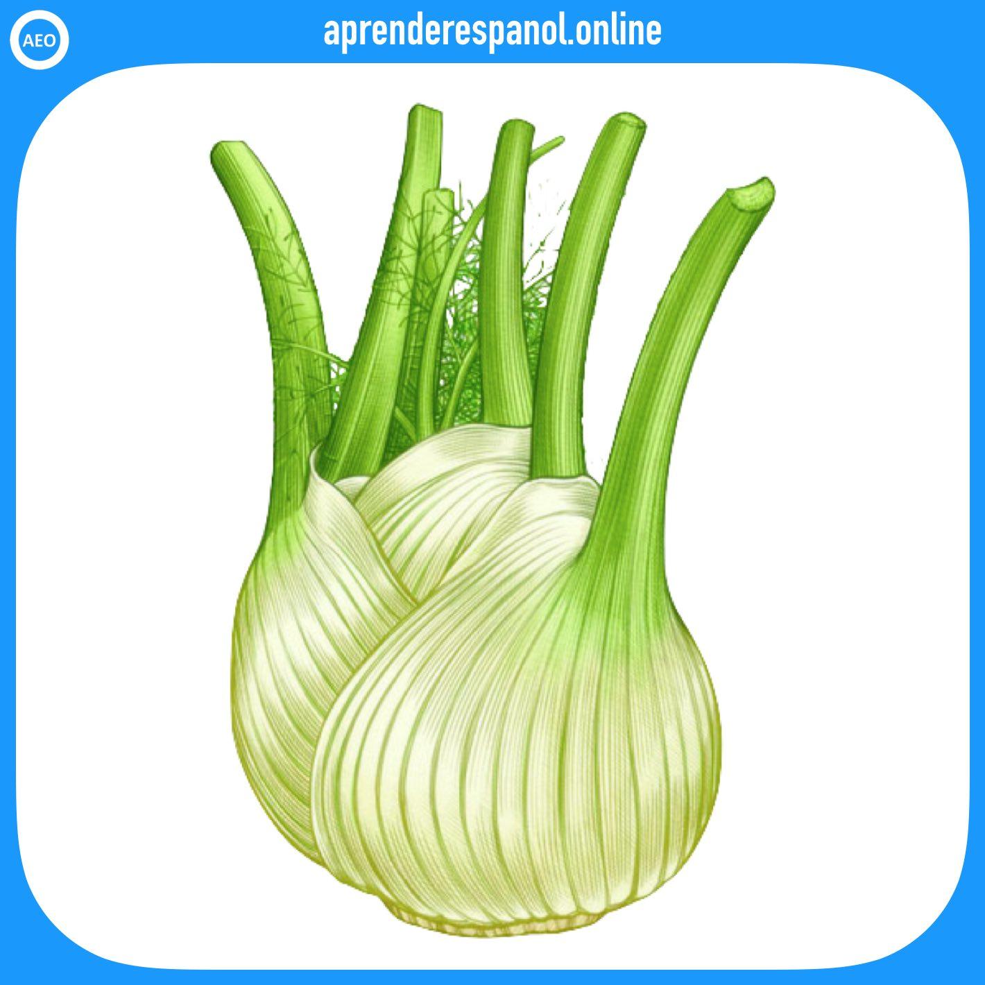 hinojo | verduras en español | vocabulario de las verduras en español