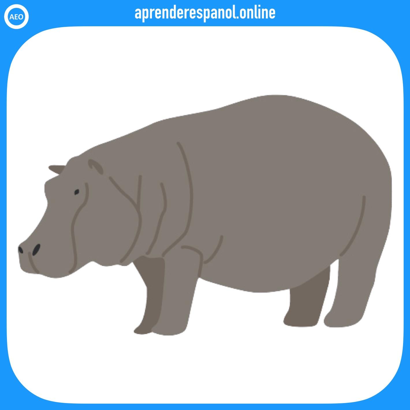 hipopótamo | animales en español | vocabulario de los animales en español