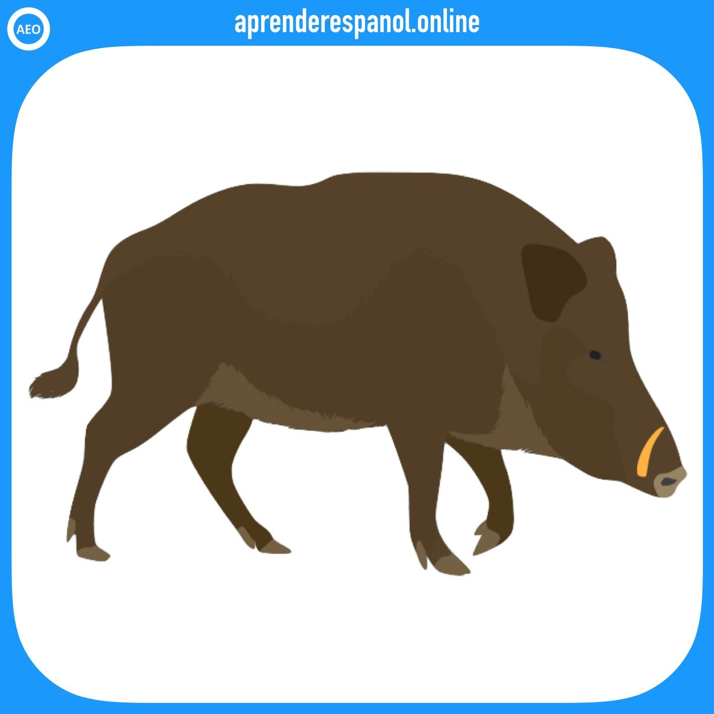 jabalí | animales en español | vocabulario de los animales en español