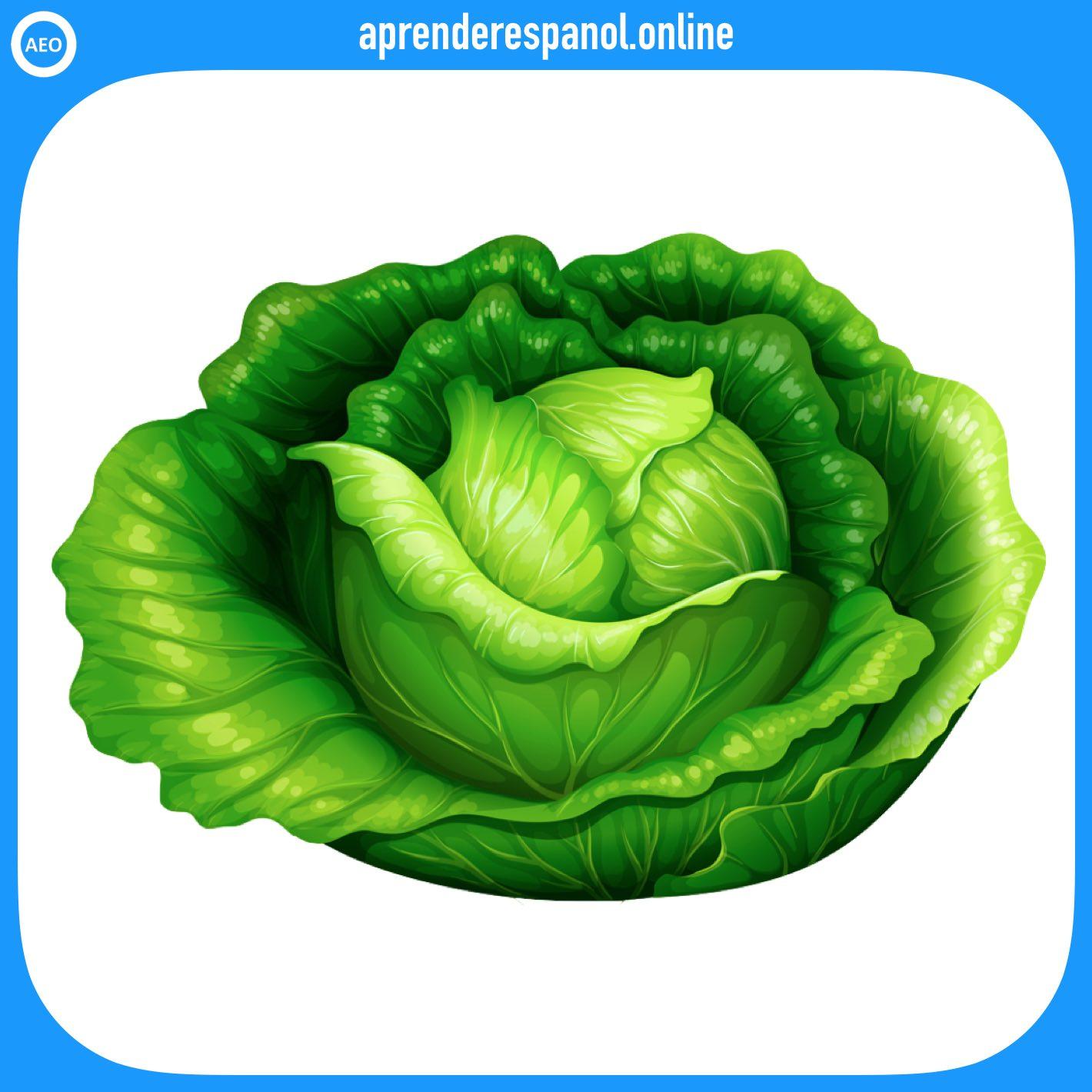 lechuga | verduras en español | vocabulario de las verduras en español