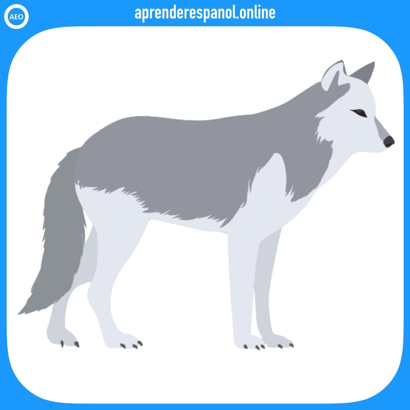 lobo | animales en español | vocabulario de los animales en español