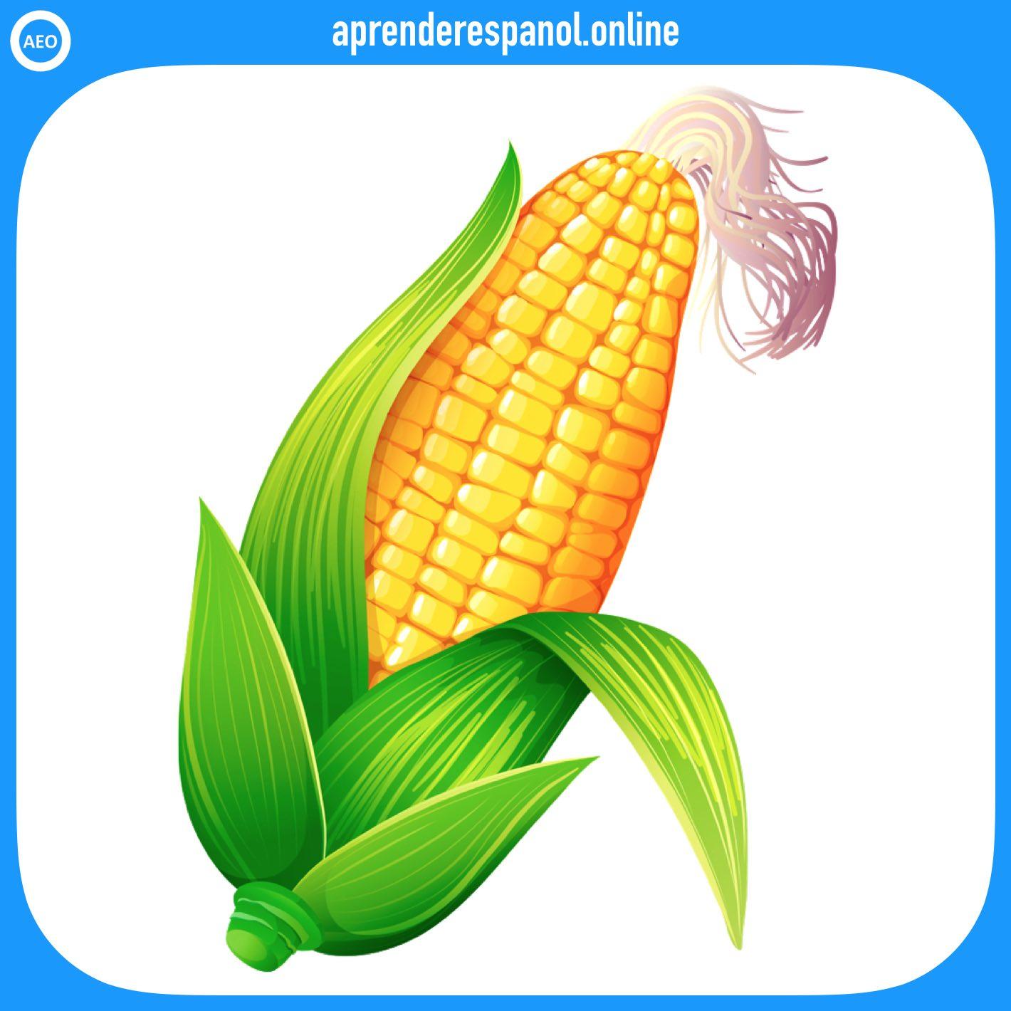 maíz | verduras en español | vocabulario de las verduras en español