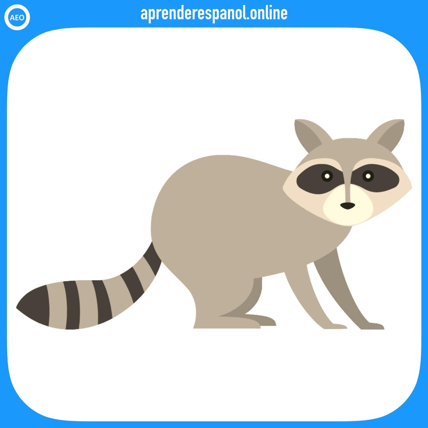 mapache | animales en español | vocabulario de los animales en español