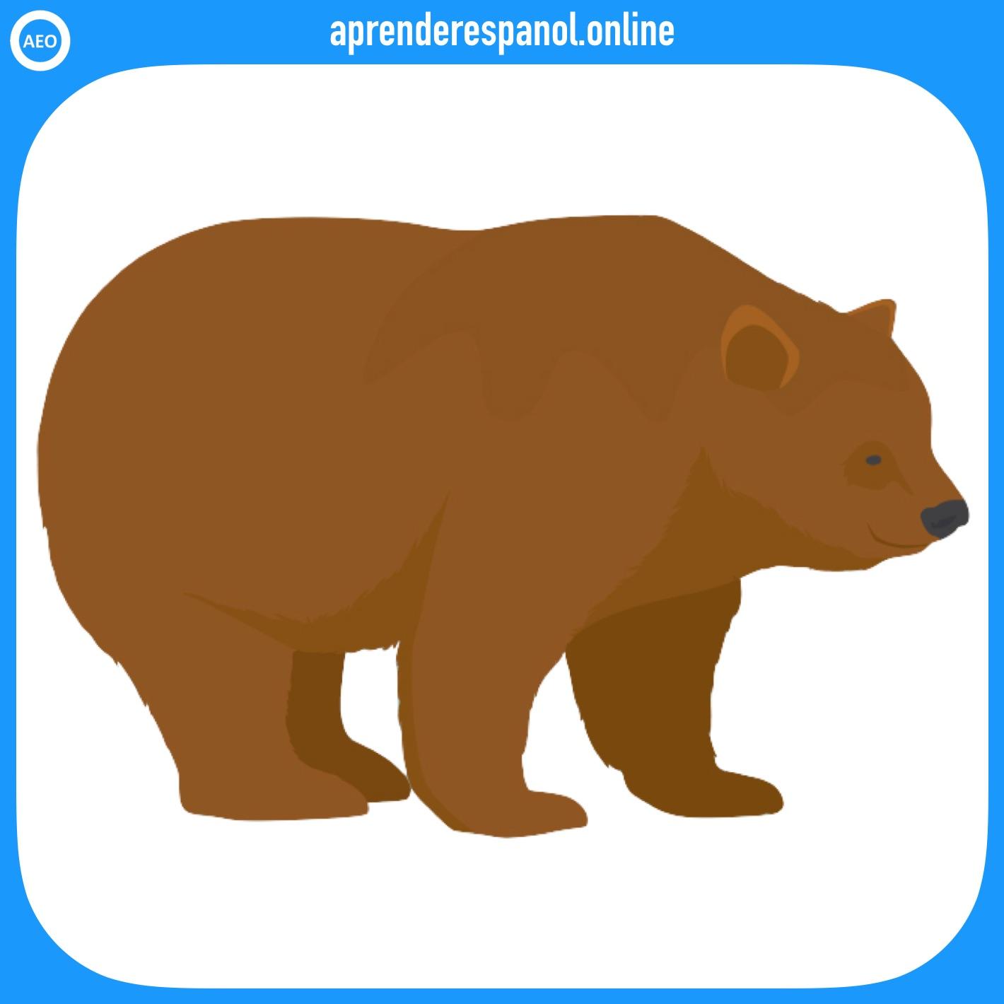 oso | animales en español | vocabulario de los animales en español