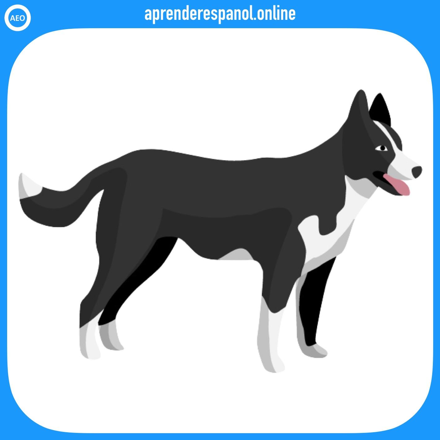 perro | animales en español | vocabulario de los animales en español