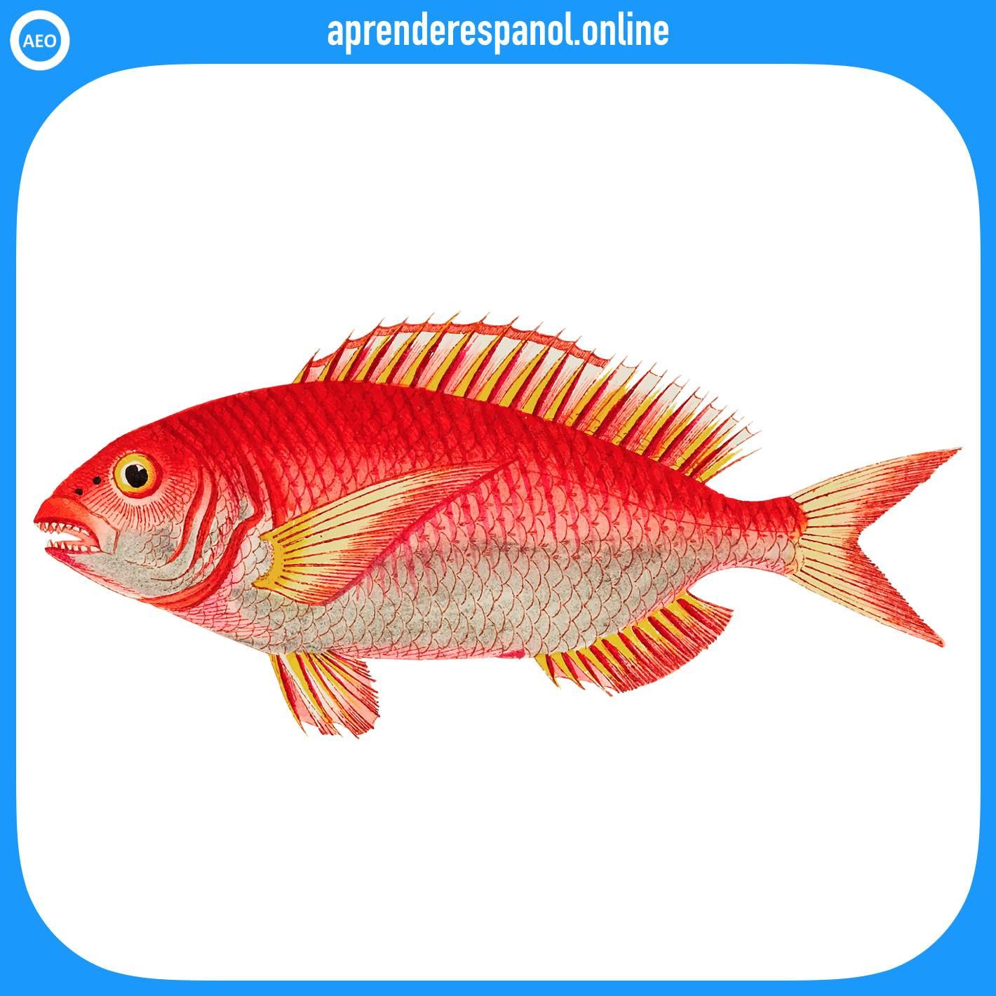 pez | animales en español | vocabulario de los animales en español