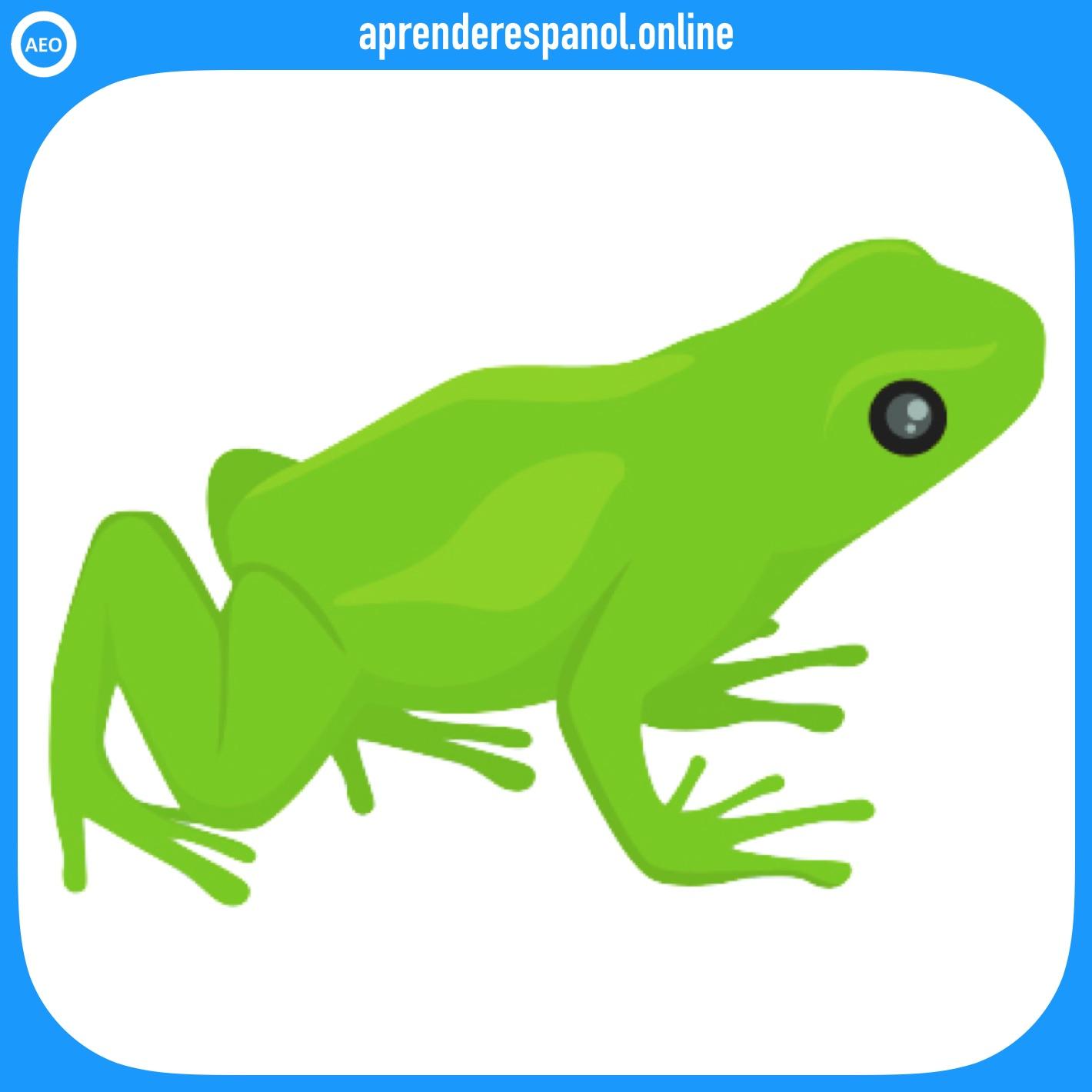 rana | animales en español | vocabulario de los animales en español