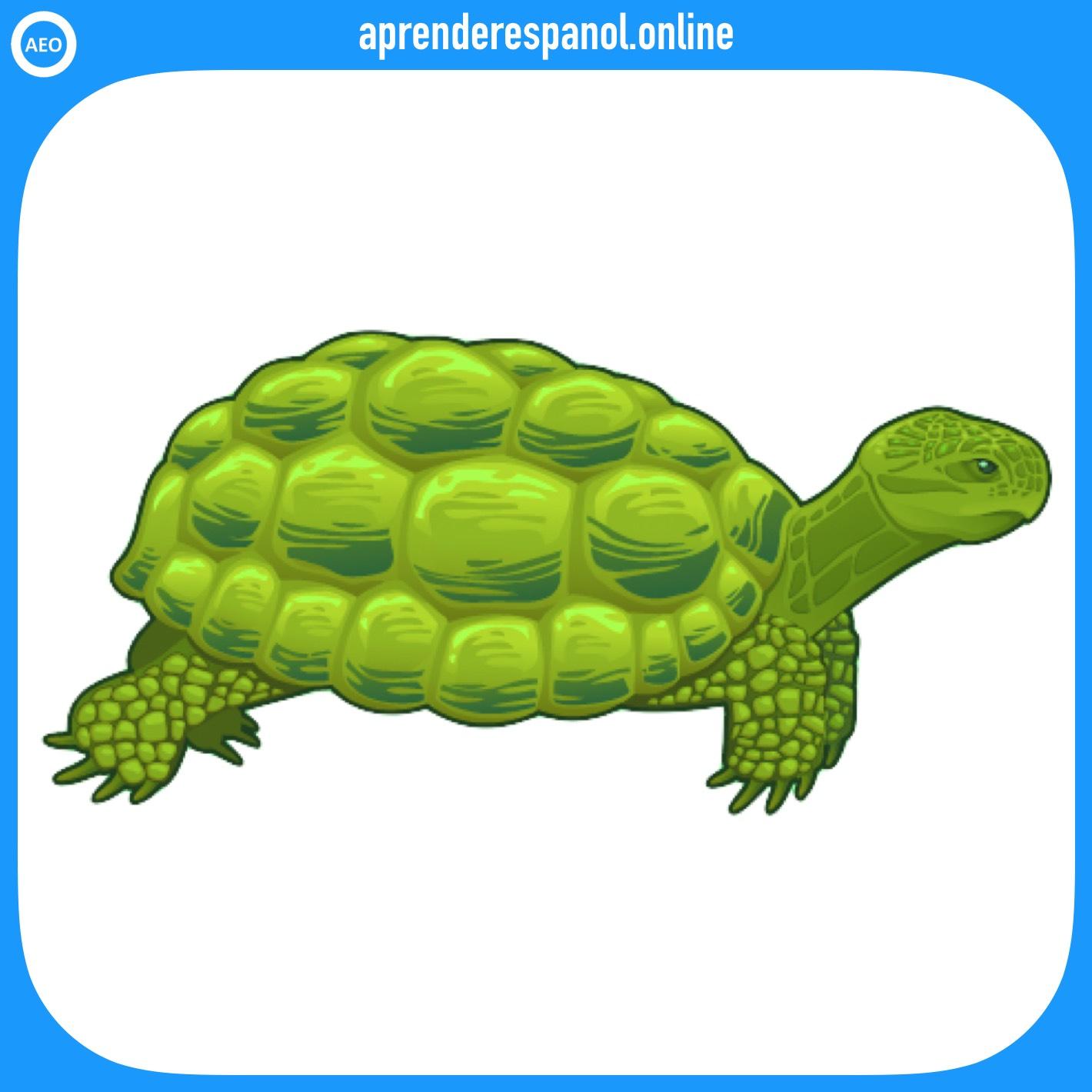 tortuga | animales en español | vocabulario de los animales en español