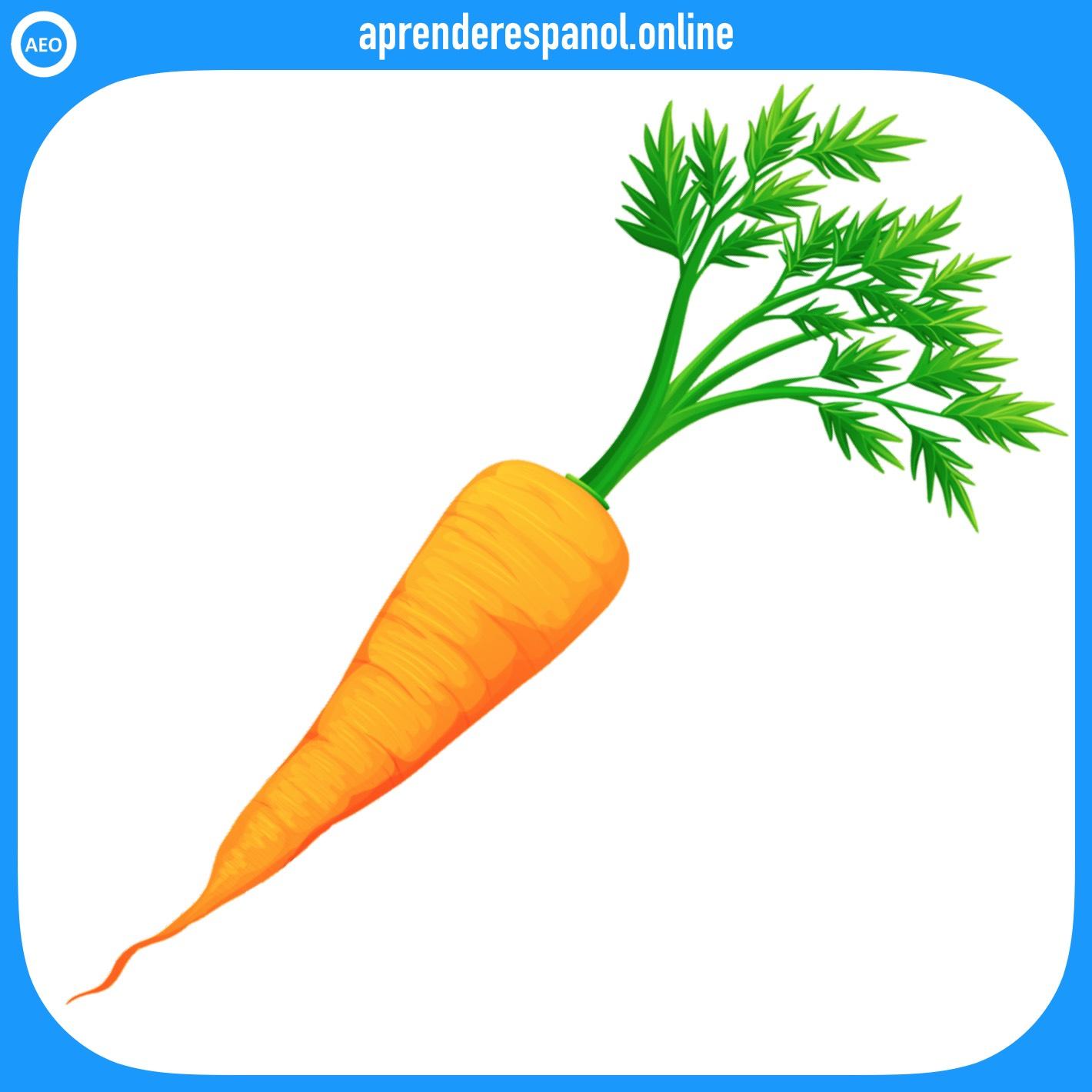 zanahoria | verduras en español | vocabulario de las verduras en español